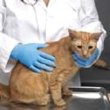 Veterinary Animal Care Gloves